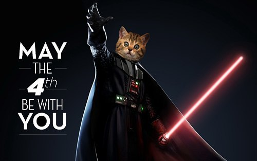 May The 4th Be With You! #maythe4thbewithyou  #StarWars #cats